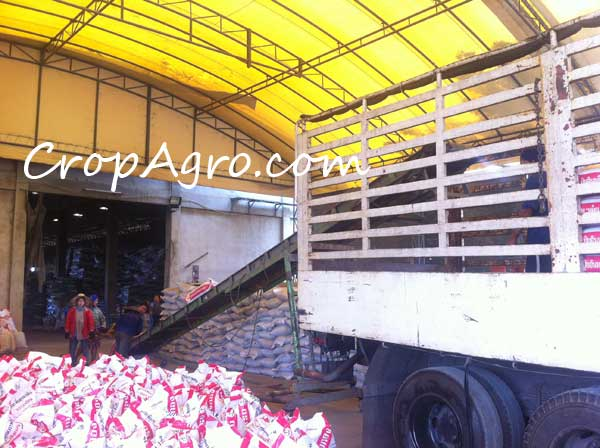 Organic Fertilizer bag export